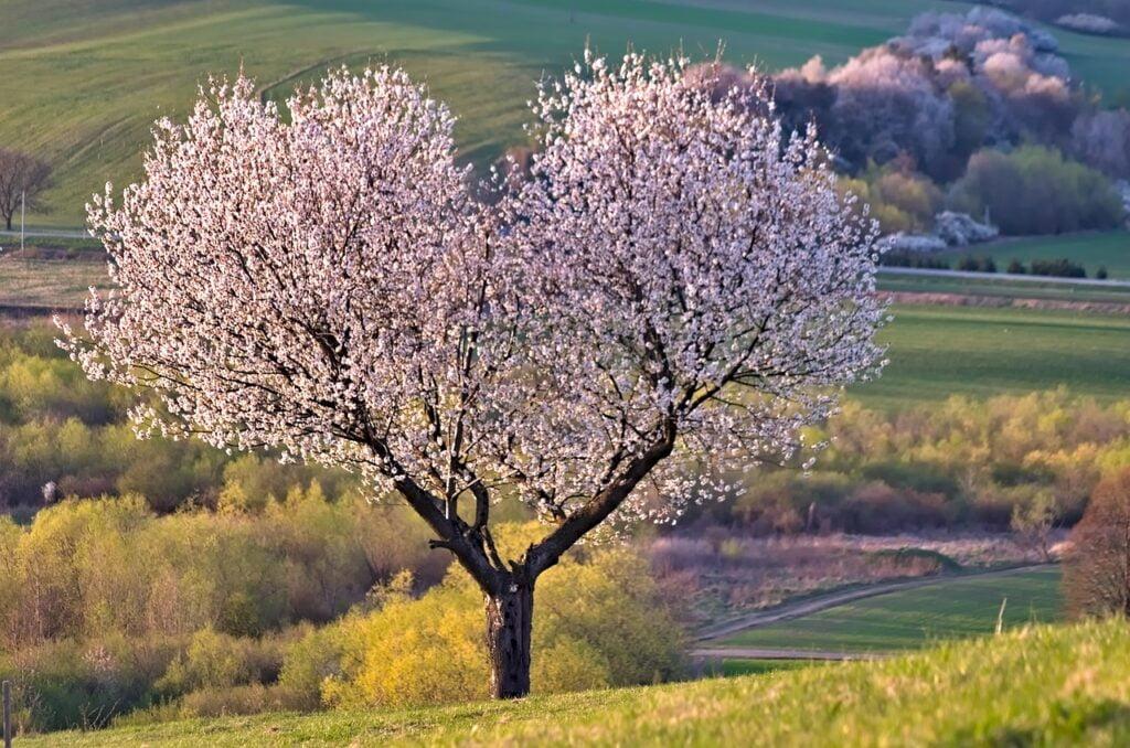 tree, nature, heart